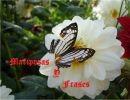 Mariposas y frases