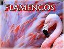 La Belleza De Los Flamencos