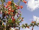Leyendas peruanas 5. La misión del colibrí