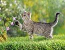 Unos gatos muy fotogénicos