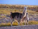 Argentina – Imágenes del Altiplano
