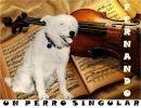 Fernando, un perro singular