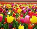 Un sueño de primavera