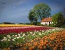 La Ruta de las Flores en Holanda