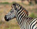 Argentina – Parque Nacional Kruger – Sud África
