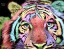 Multicolores Divertidos