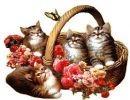 Gatos – tigres