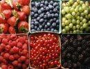 Frutos del Bosque