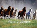 Frases y  caballos