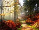 Un sueño de otoño