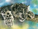 Animales de Lesley Harrison