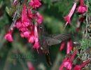 La misión del colibrí