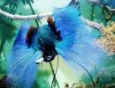 Aves de Paraíso