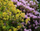 Relato de un viaje: El jardín de Inverewe