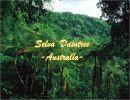 La selva Daintree – Australia