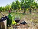Días de Vino y Uvas