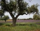 Paisajes de España: Badajoz