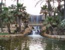 El palmeral de Alicante