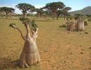 Islas del mundo: Socotra