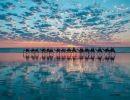 Espejos en el agua 2