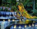 Atlanta Botanical Garden  Usa