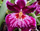 Atlanta Botanical Garden – Orchid Daze Usa