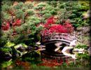 Anderson Japonese Garden Usa