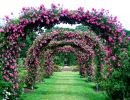Elizabeth Park Rose Garden Usa