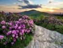 Roan Mountain Usa