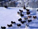 En la Nieve 2