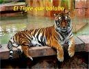 El tigre que balaba