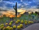 Desert botanical garden 1 USA