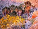 Anza – Borrego desert state park USA