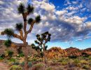 Joshua tree national park 2 USA