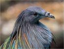 Diversos tipos de aves