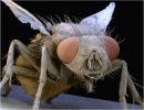 Macrografías de insectos (1)