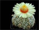 Cactus y Sus Flores