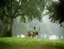 Vida salvaje en la naturaleza