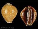 Bellas conchas marinas