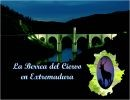 La Berrea del Ciervo en Extremadura