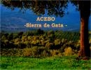 Acebo – Cáceres