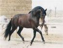 Andalucia caballos