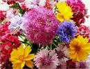 Flor comestible