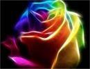 La belleza de los colores
