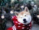 Animales en la nieve