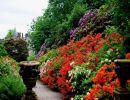 Dawyck botanic garden Scotland