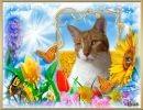 Gatos en Primavera