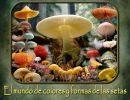 El mundo de colores y formas de las setas