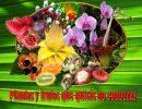 Plantas y frutos que quizás no conozcas