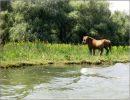 A lo largo del Danubio